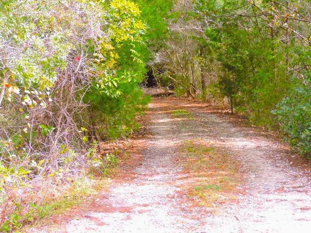 15447 Younis West Road Jacksonville, FL 32218